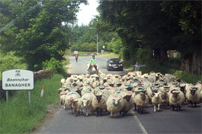 Rush hour in Banagher